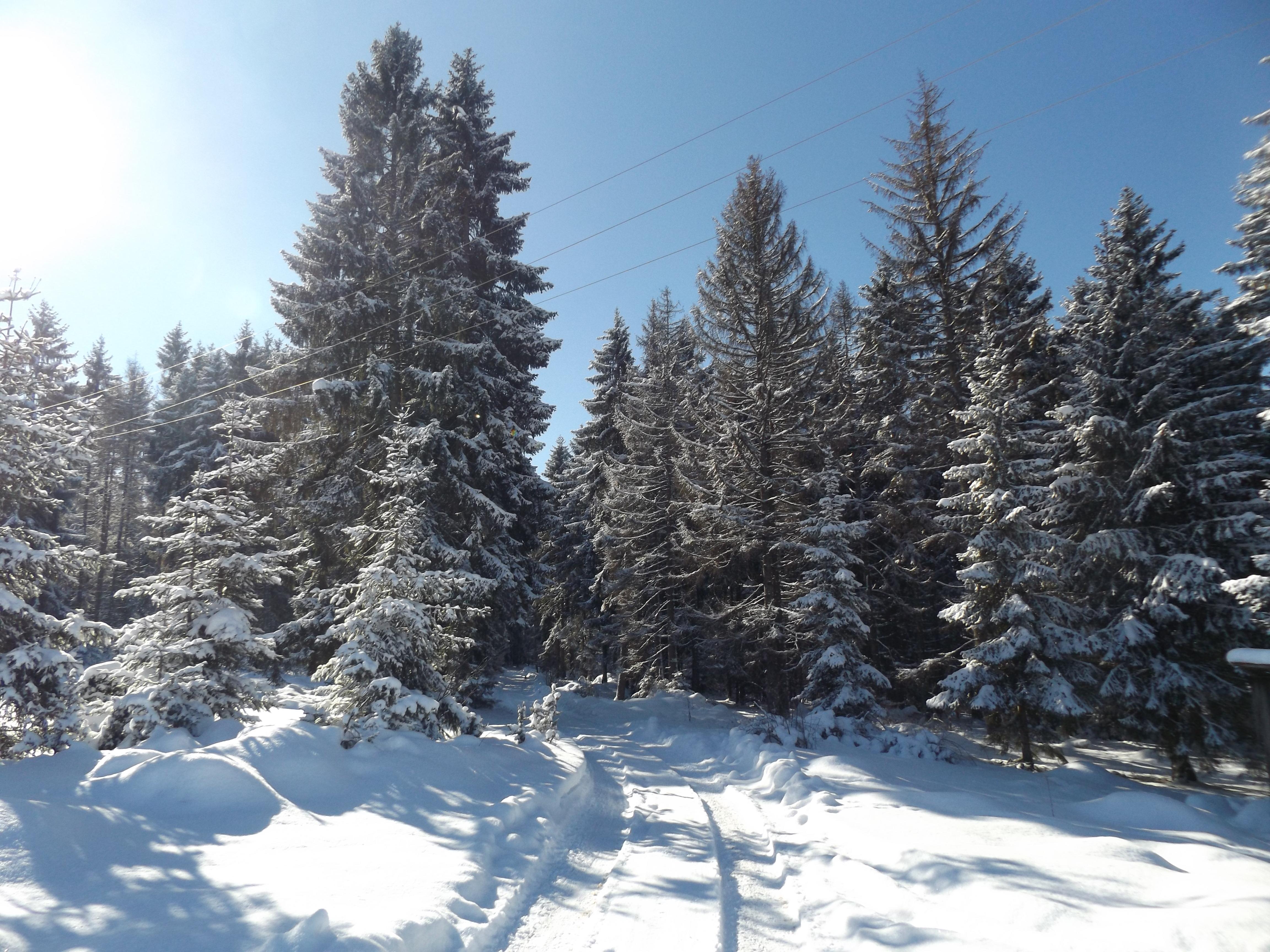 Winter 8, Rudno, Golija, Šekler