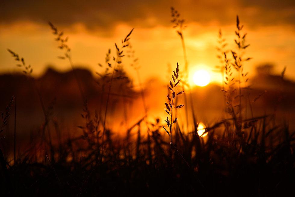 vecteezy_silhouette-of-tall-grass-in-orange-sunrise_1987137.jpg