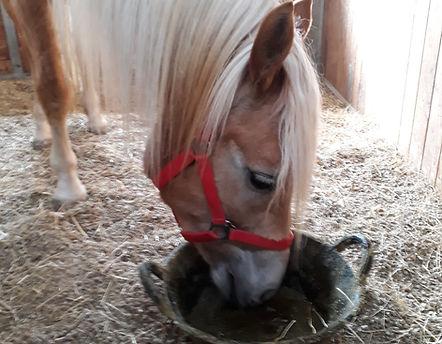 Pferde Stärken, Kinder Stärken, Kinderstärken, Therapiepferd Amber, Therapiezentrum Gramatneusiedl