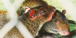 Animales Huerta Biologica