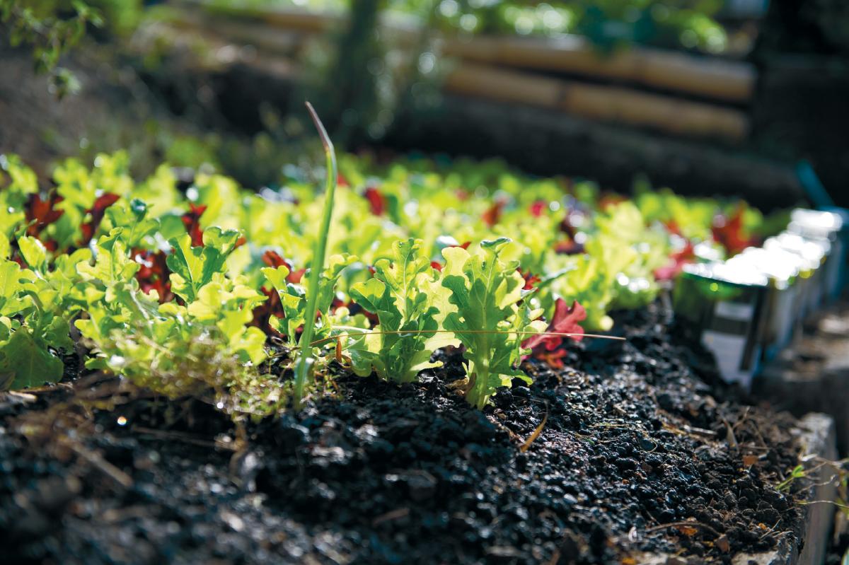 Cultivo organico - Organic Vegetable