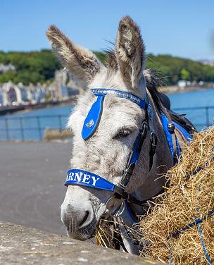 Donkeys 22A - f edited.jpg