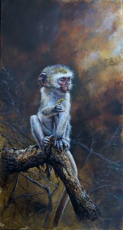 baby vervet monkey.jpg