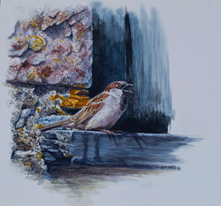 Cock sparrow watercolour.jpg