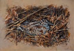 Woodcock on nest