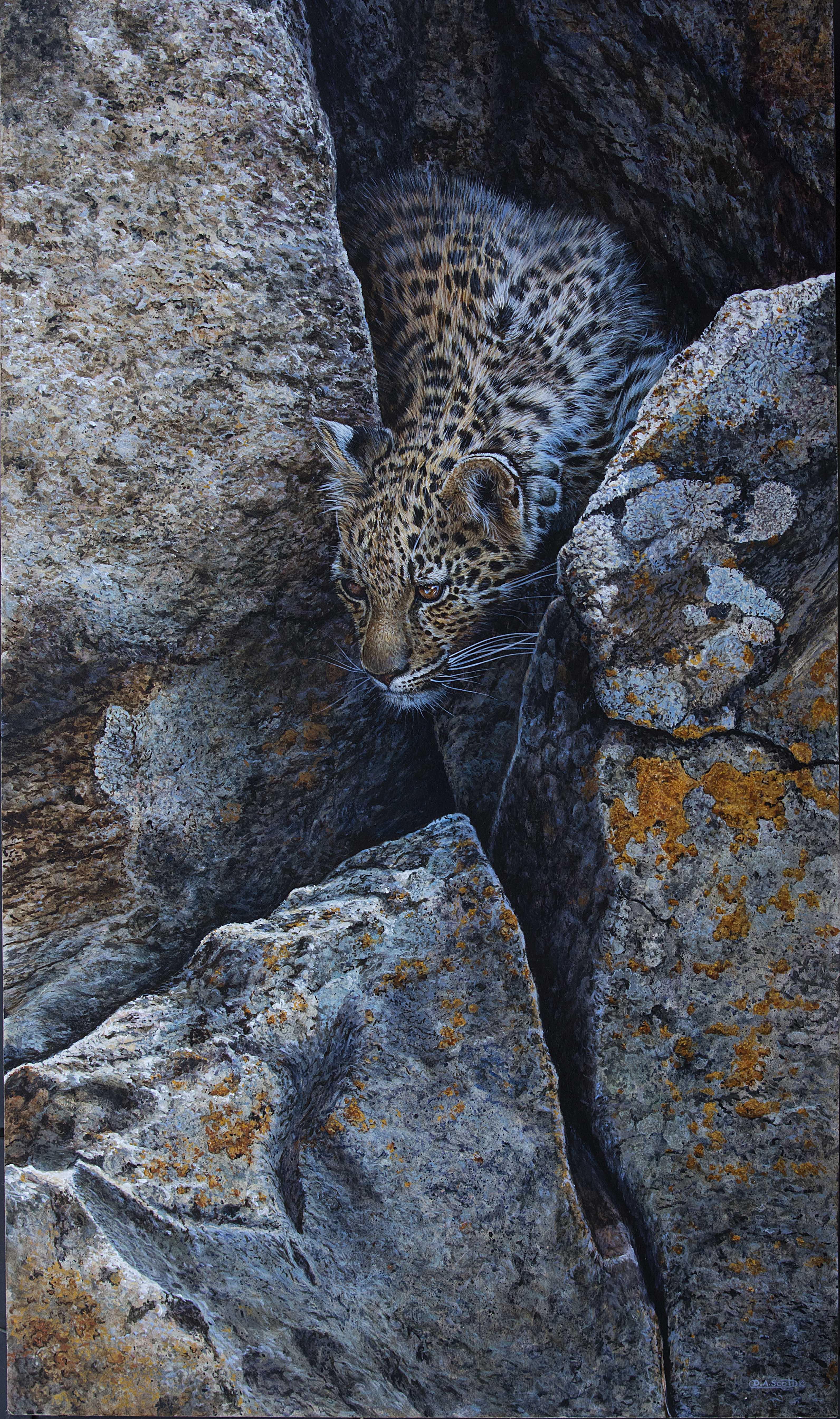 leopard cub.jpg