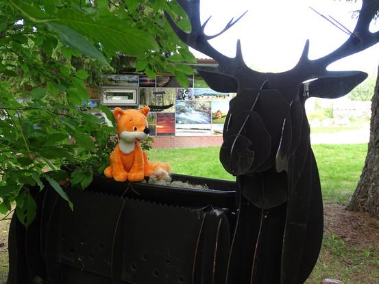 My dear  deer.......!
