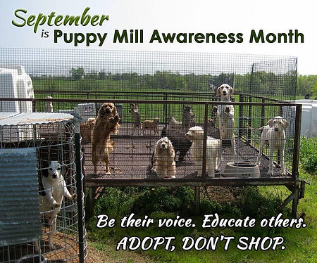 September Puppy Mill Awareness Month.jpg