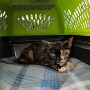 Diamond - Loving Care Cat Rescue