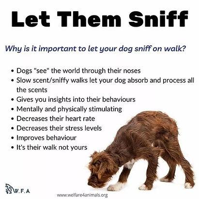 Let Them Sniff.jpg