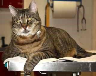 Impfung Katze