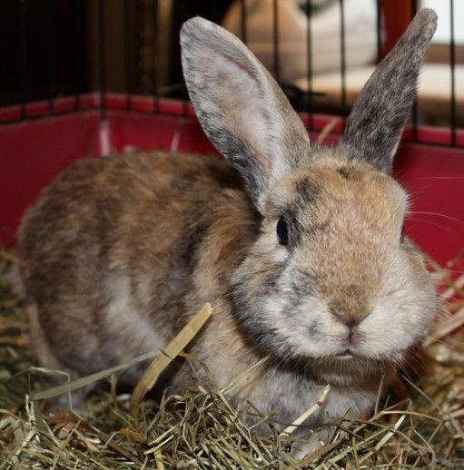 Impfung Kaninchen