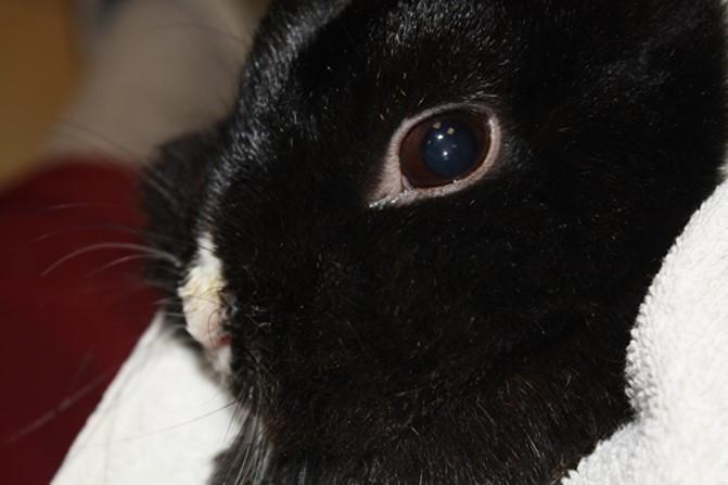 Schnupfen bei Kaninchen