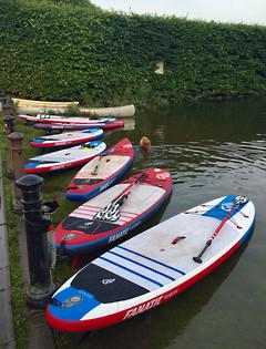 River Thames SUP Safari