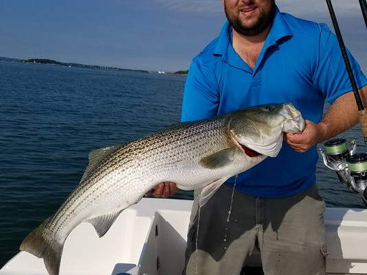 Boston Bass Report
