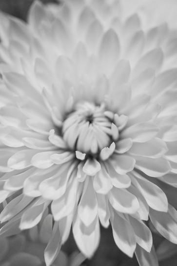 Flowers 1871