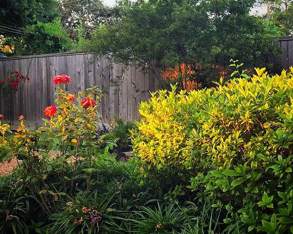 New day backyard.jpg