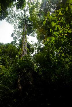 Costa Rica00232.jpg