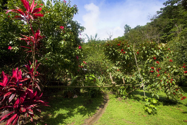 Costa Rica00262.jpg