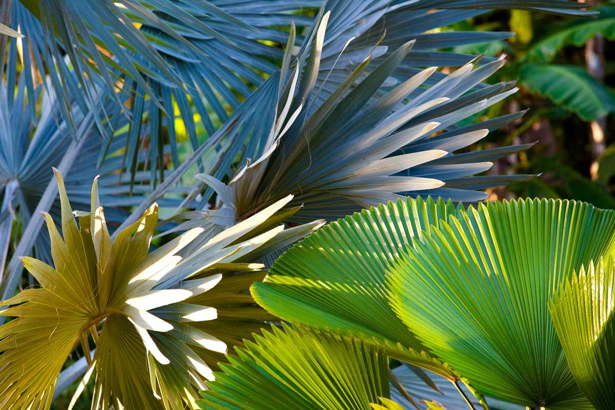 Costa-Rica00651.jpg