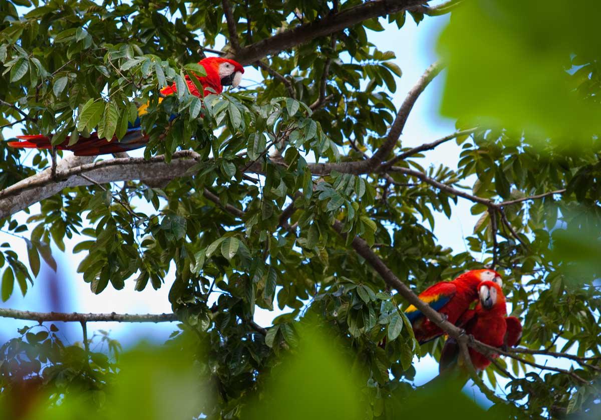 Costa-Rica00114.jpg