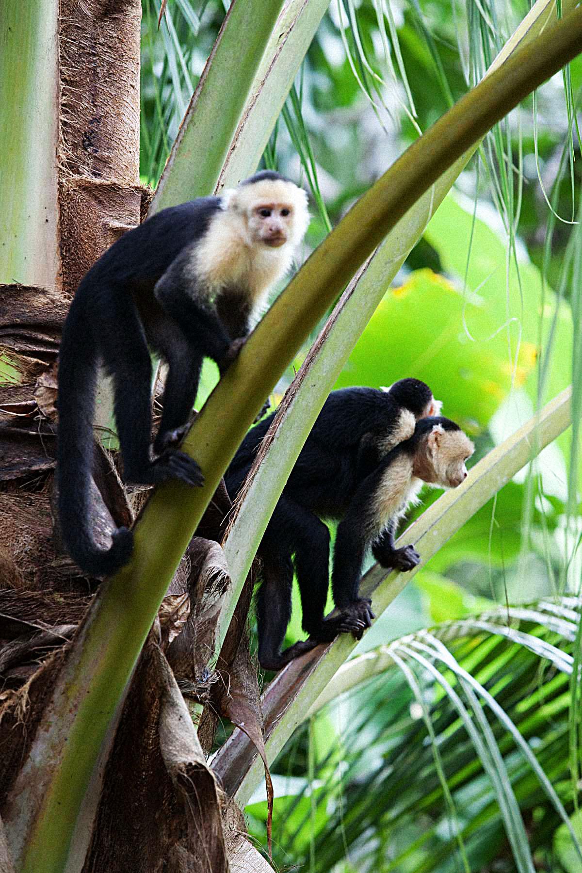 Costa-Rica00391.jpg