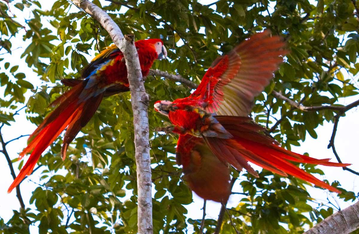 Costa-Rica00095.jpg