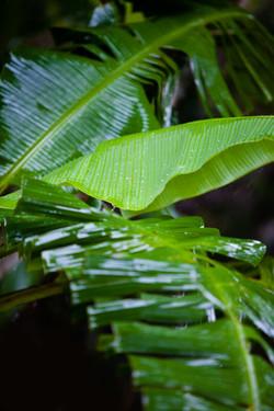 Costa-Rica00036.jpg