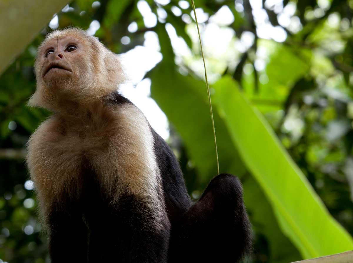 Costa-Rica00366.jpg