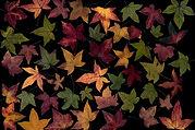 leaves-1444954_1920.jpg