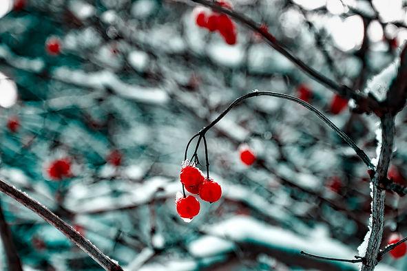 cherry-1748637_1920.jpg