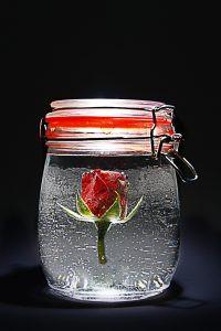 Les élixirs de rose