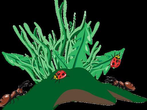 Les plantes nourrissantes