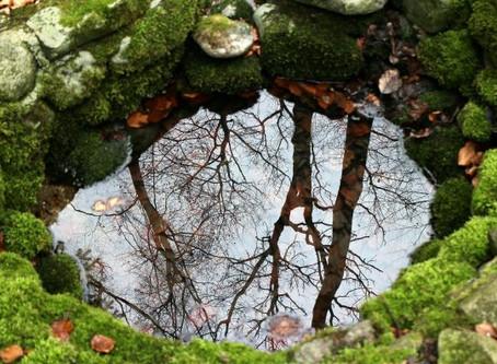 Le miroir que la Nature nous tend