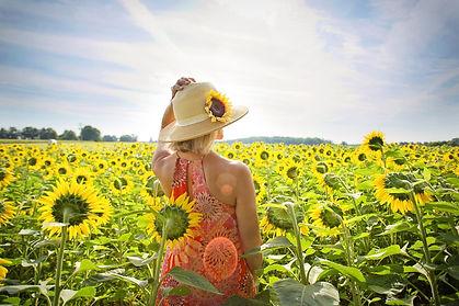 sunflowers-3640935_1920.jpg