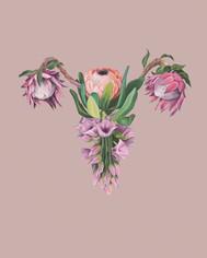 floraluterus2pink.jpg