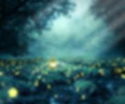 night-3078326_1920.jpg