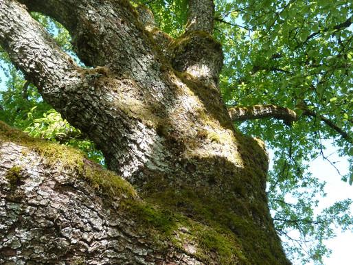 Et si on se faisait accompagner par un arbre!