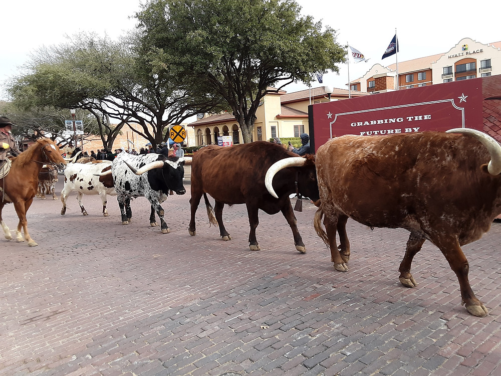 Photo of Cattle Drive by Emily Coggins.