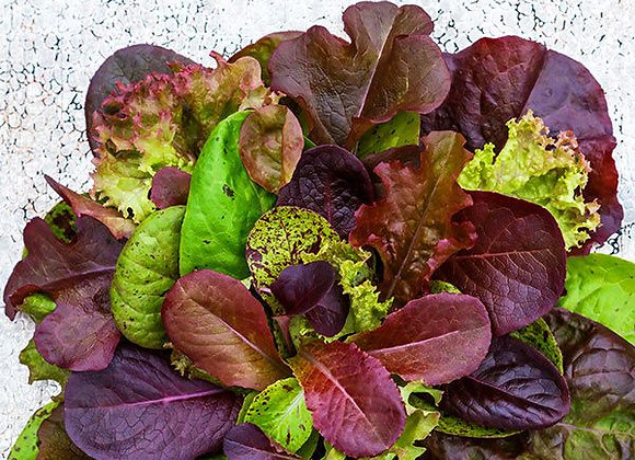 Lettuce mix Red Wing