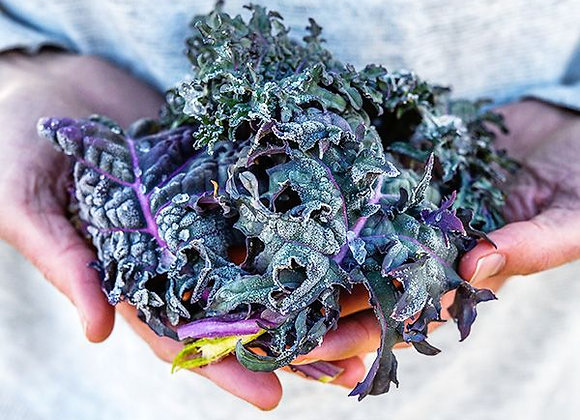 Kale Russian Red or Ragged Jack