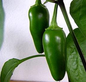 Pepper Jalapeño hot