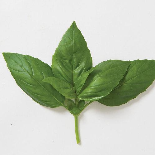 Basil - Aroma 2 organic