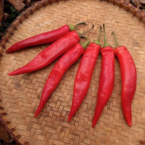 Pepper Hong Gonchu Large