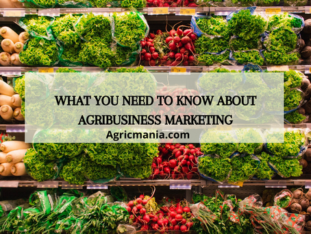 What you need to know about Agribusiness marketing