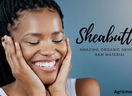 Shea butter: Amazing organic skincare raw material