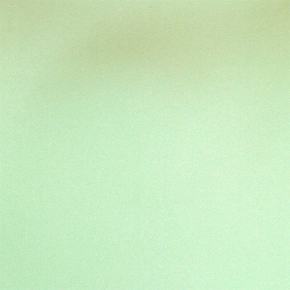 lisa verde