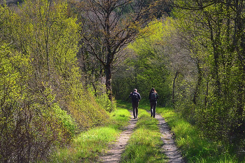 Two people walking on a forest path in t