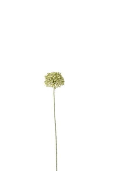 Fiore Aglio bianco