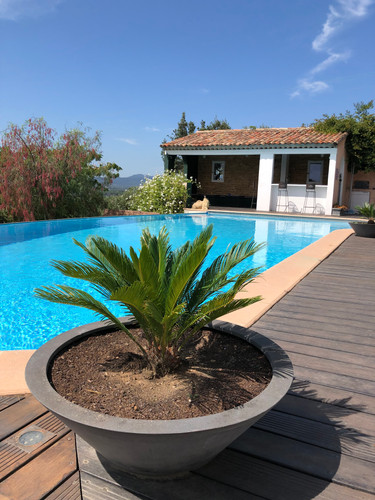 piscine et palmier.jpg